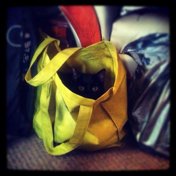 My Ninja Cat.