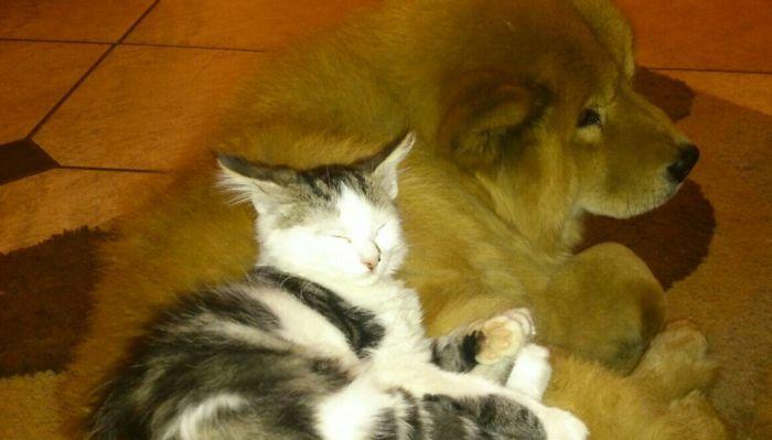 Kitty-love!
