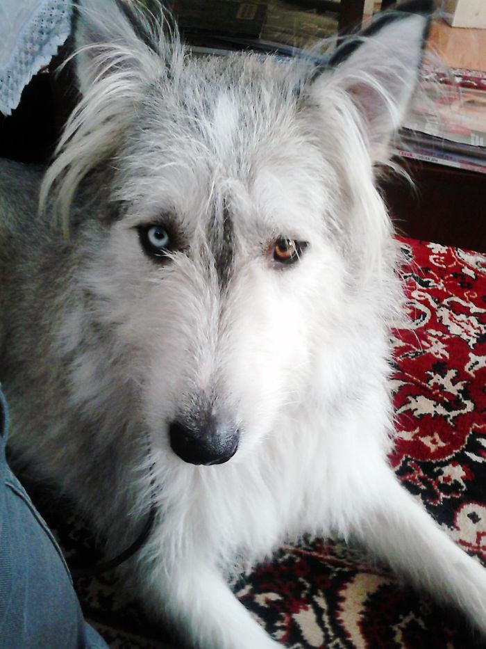 Lucy – Half Husky, Half Collie :)