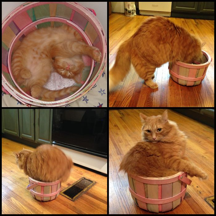 Panda The Day I Brought Him Home And Then Again 5 Years Later, Rediscovering His Basket!
