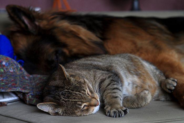 Paco & His Mackerel Cat #2