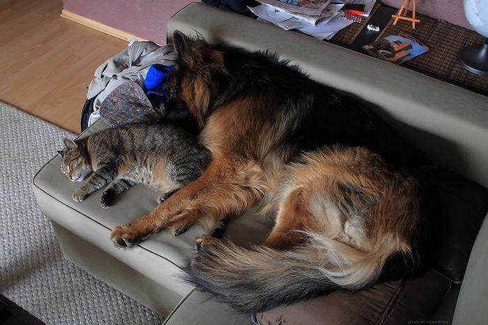 Paco & His Mackerel Cat #1