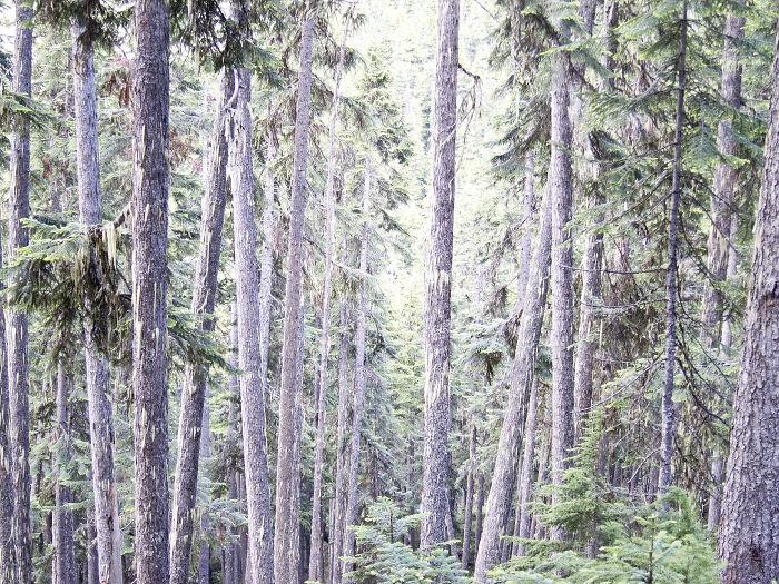 Singing Pass, British Columbia, Canada