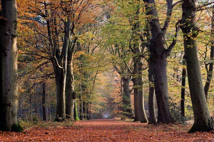 Beetsterzwaagse Bossen (woods), Beetsterzwaag, Friesland, The Netherlands