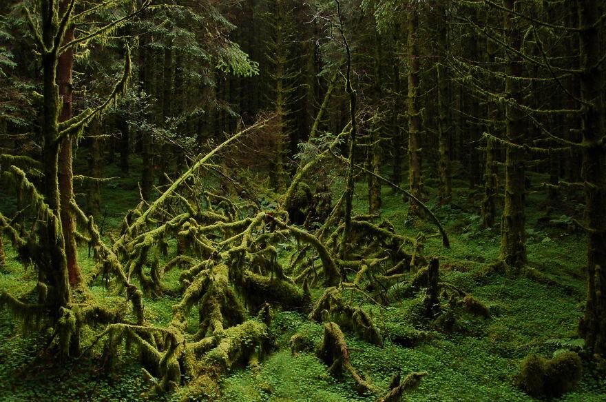 первобытность лес картинки пришить