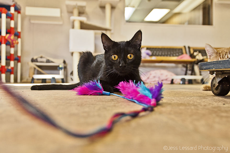 I Photograph Rescue Cats At The Largest No-Kill Cat Sanctuary In California (700+ Cats) To Help Them Get Adopted