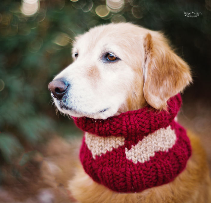 Valentine's Day Knitting For Dogs