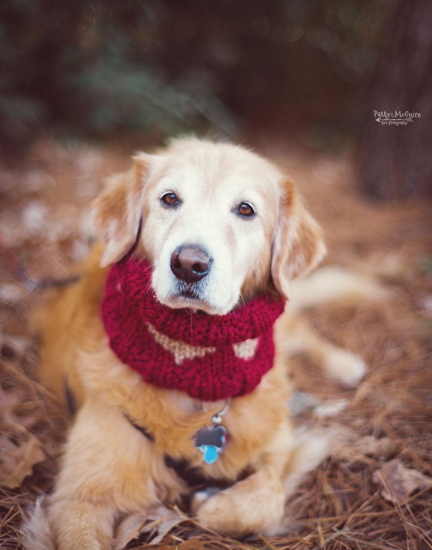 Σκύλος πλεκτό δώρο Άγιος Βαλεντίνος