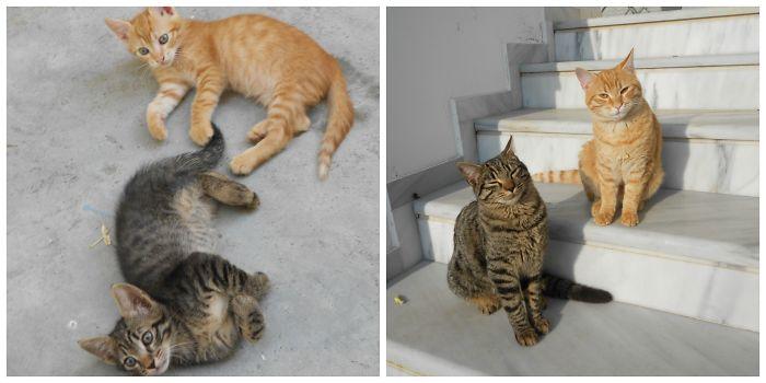 3 Years Later…best Buddies Enjoying The Sun!