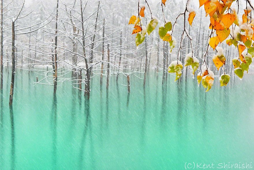 I Live In Hokkaido And Photograph This Magnificent Pond Every Season Bored Panda