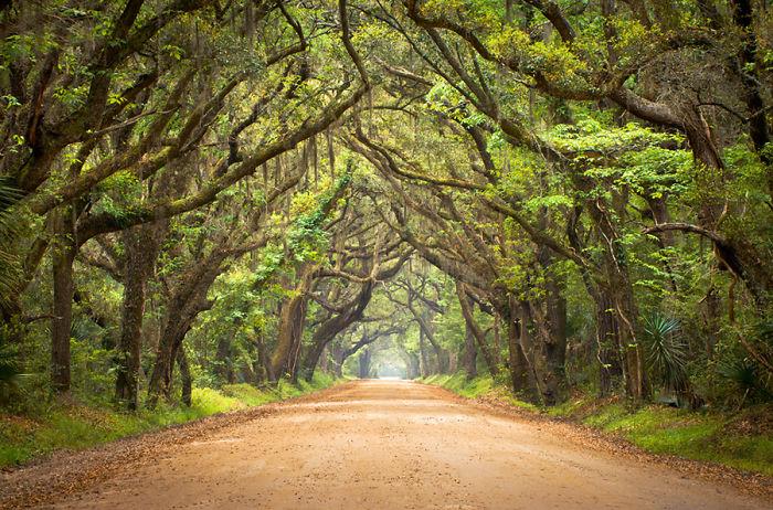 Tree Tunnel – So Carolina, Usa