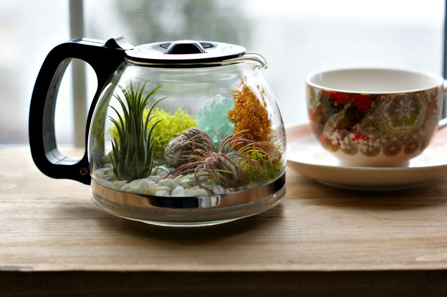 Upcycled coffee pot terrarium3  880