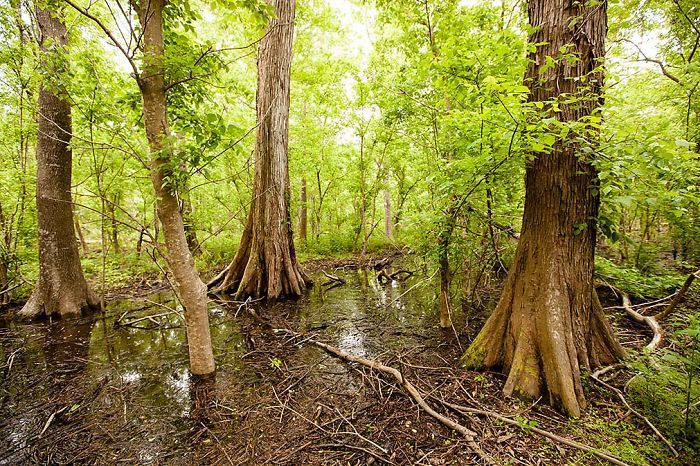 Woodlands Conservancy, Greater New Orleans, Louisiana