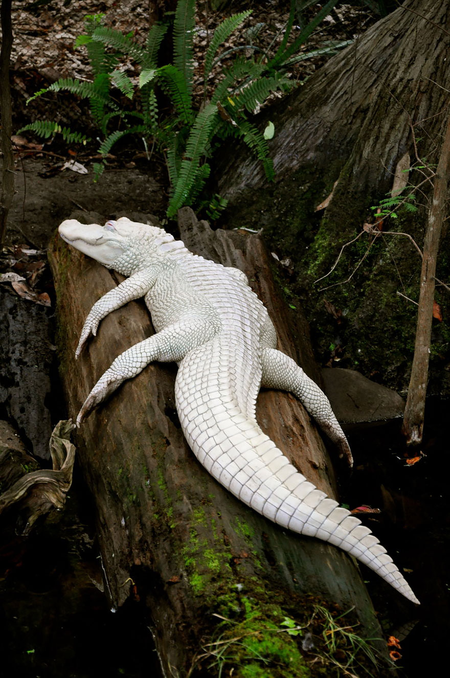 21+ Albino Animals That Don't Need Color To Look Cool ...