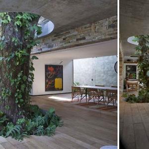 Tree Inside A Livingroom