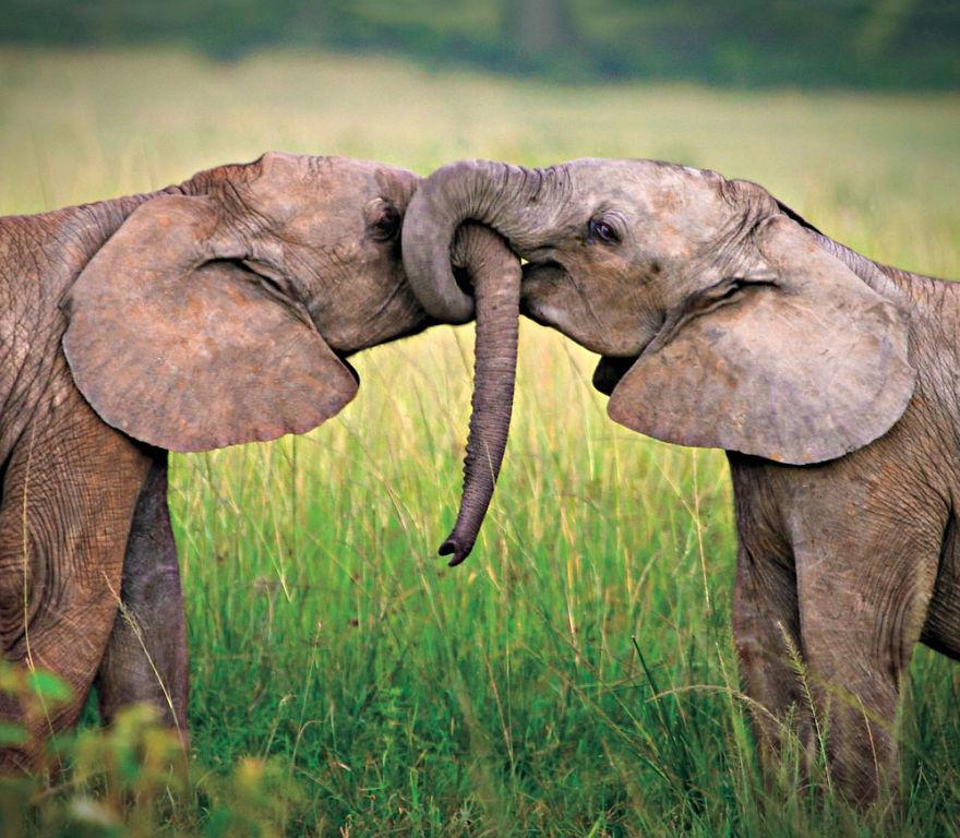 ζώα ζευγάρια