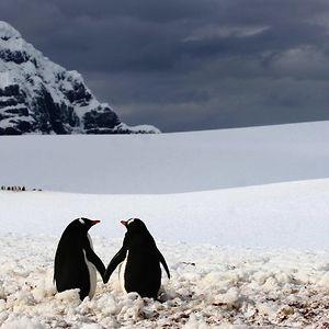 Penguins Walk Hand In Hand