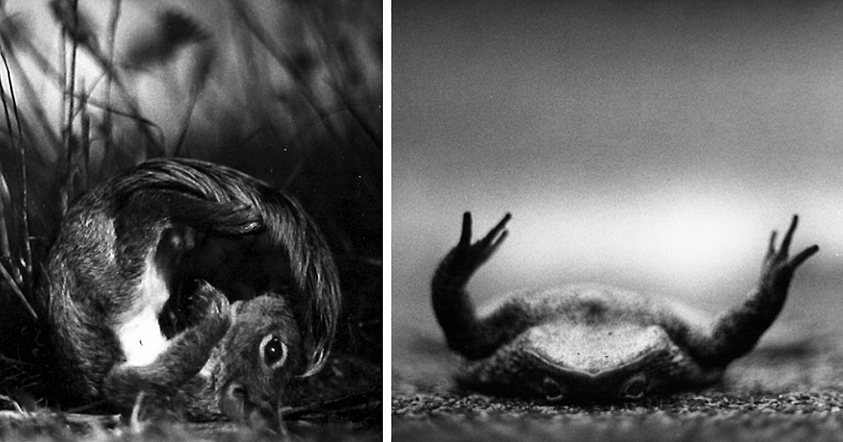 I Captured These Animals With My Father's Old Japanese Film Camera From 1960's