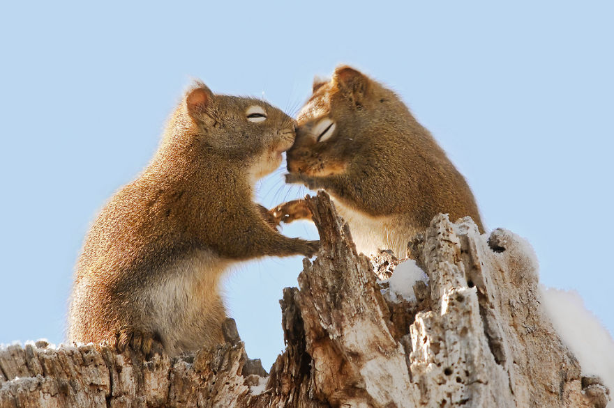 Cute Squirrels Whispering Sweet Nothings