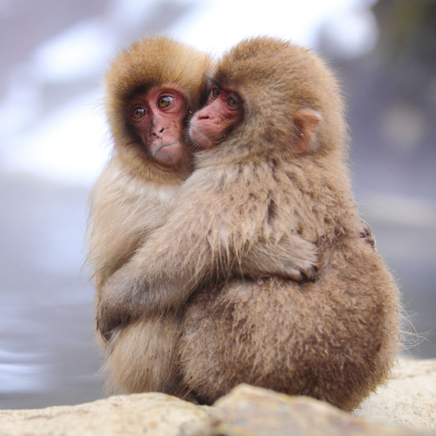 Monkeys Cuddling