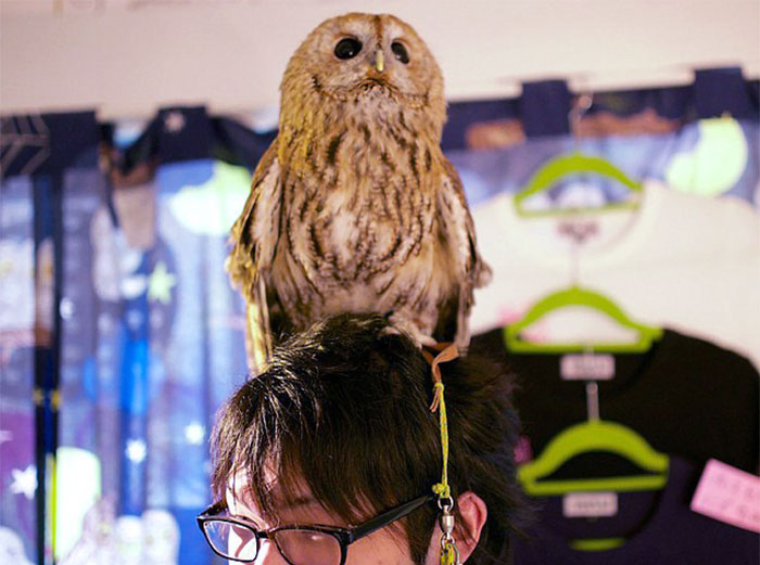 annie-the-owl-visits-london-pop-up-bar-12