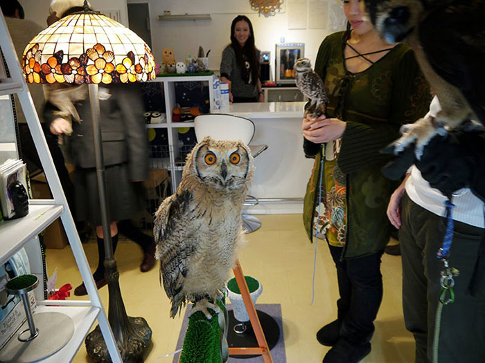 annie-the-owl-visits-london-pop-up-bar-8
