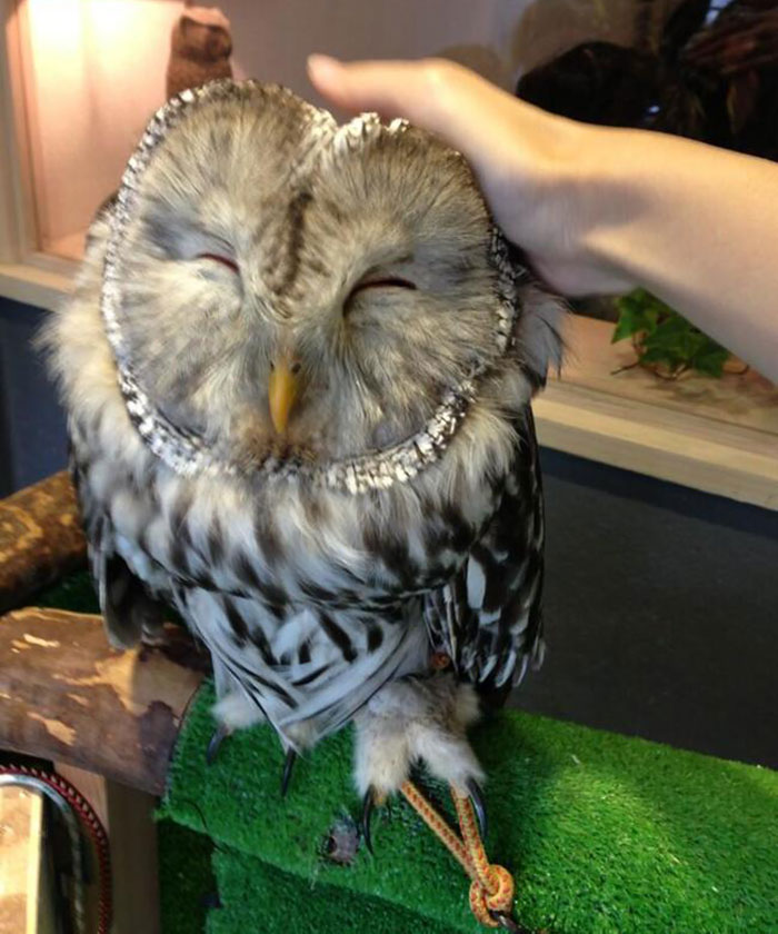 Owl Bar Opening In London To Raise Money For Owl Conservation