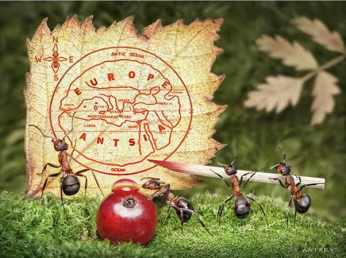The Secret Life Of Ants