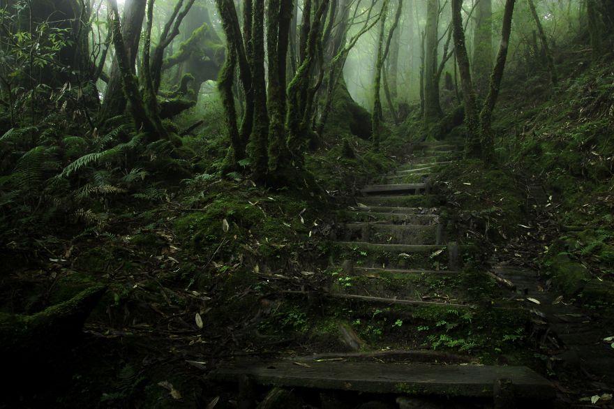 Chinese Hemlock Trail, Taipingshan, Taiwan