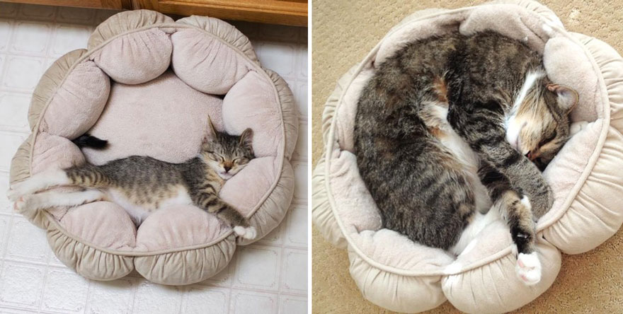 Toby Still Loves His Bed, 4 Years Later