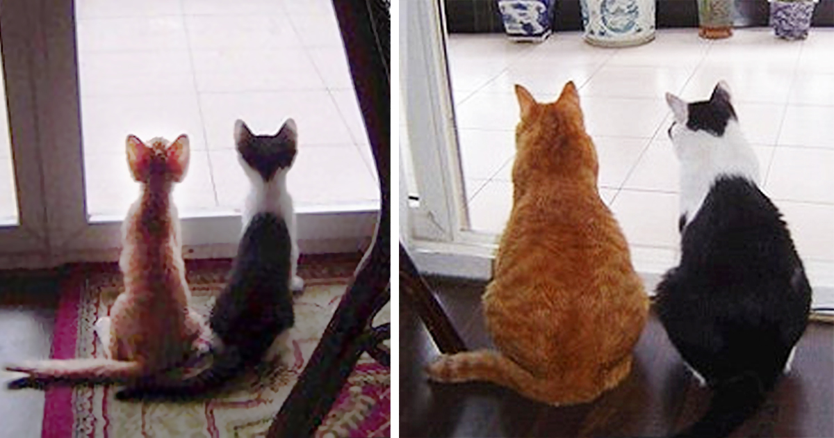 15+ Before-And-After Photos Of Cats Growing Up