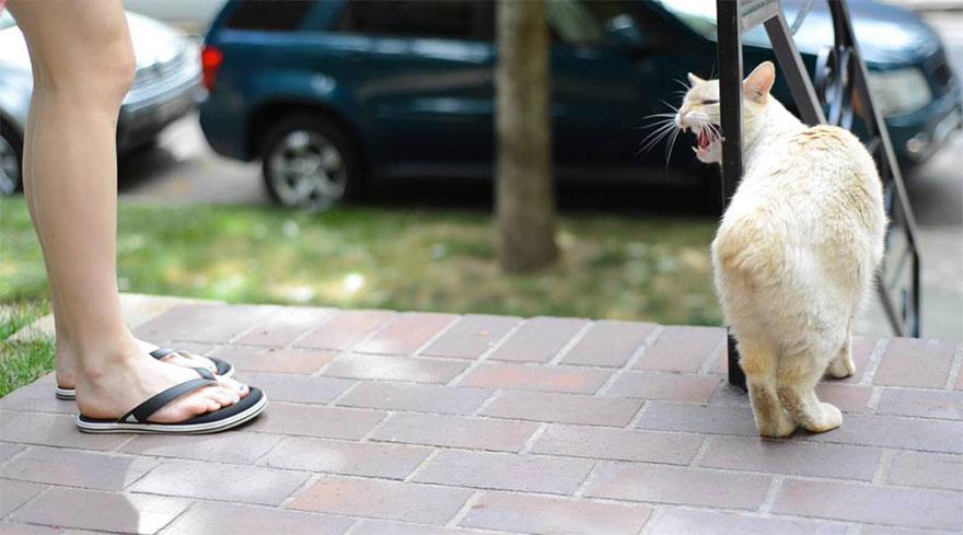bengal-cats-portrait-photography-jill-houser-18