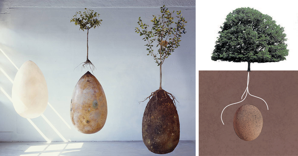 forget coffins organic burial pods will turn your loved ones into