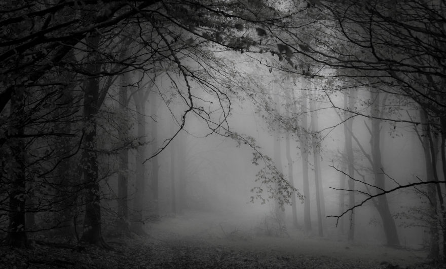 Blandford Forest, Dorset.