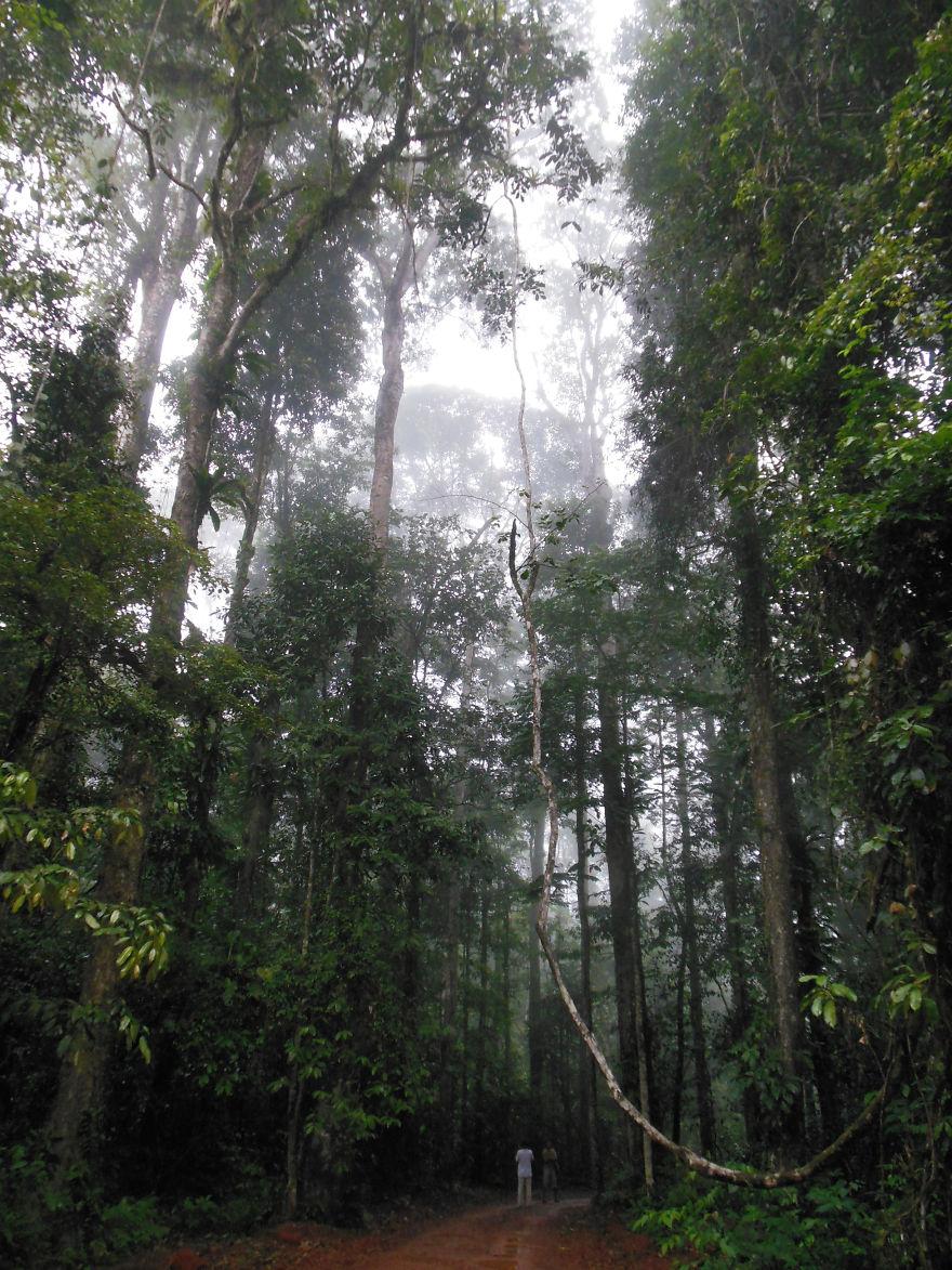 Brownsberg Nationalpark, Suriname, South America