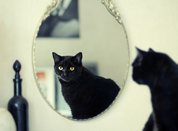 I Photograph My Cats Looking At Mirrors