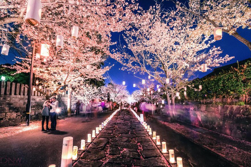 Cereza Festival de la Linterna Flor (Japón)