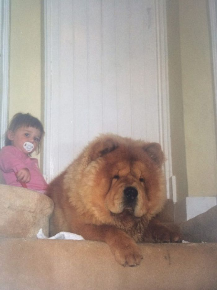 Chow Chow Protecting His Child