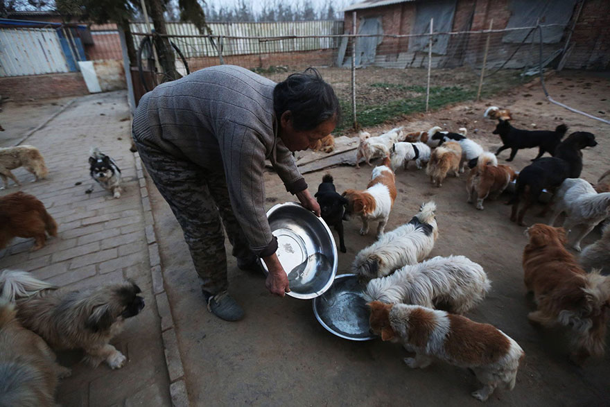 china-1300-stray-dog-shelter-wang-yanfang-3