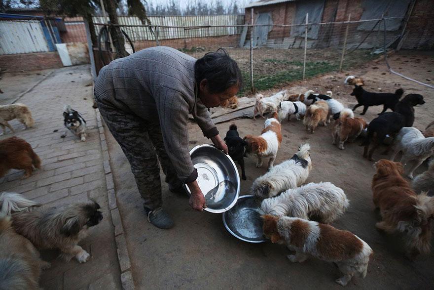 china-1300-stray-dog-shelter-wang-yanfang-3