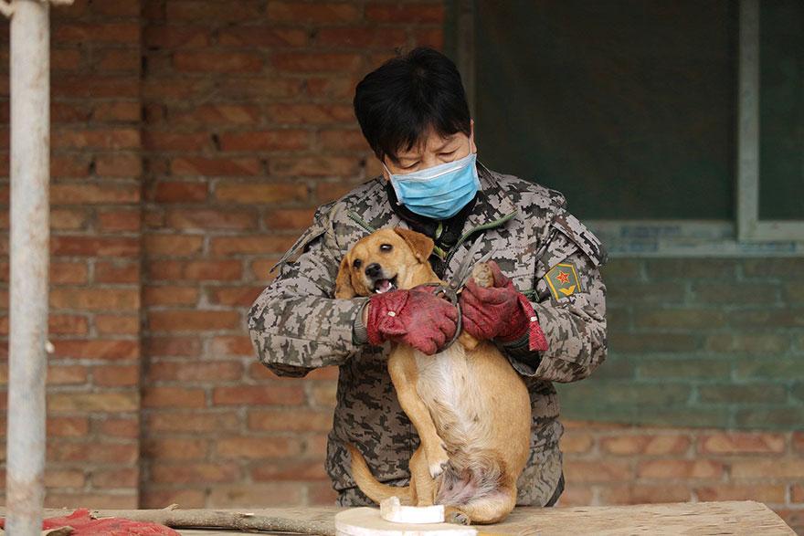 china-1300-stray-dog-shelter-wang-yanfang-5