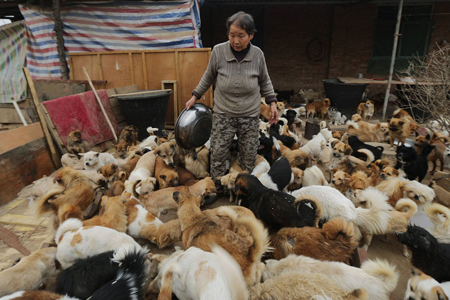 china-1300-stray-dog-shelter-wang-yanfang-7