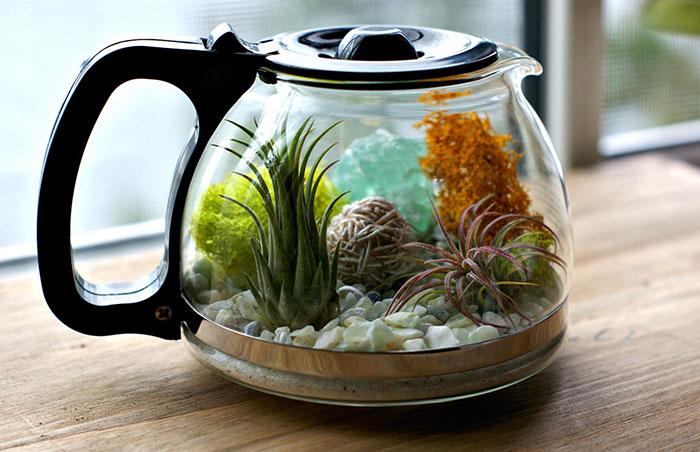 My DIY Coffee Pot Terrarium