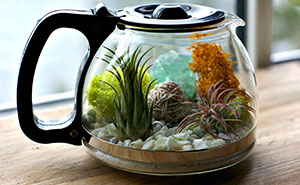 My DIY Coffee Pot Terrarium
