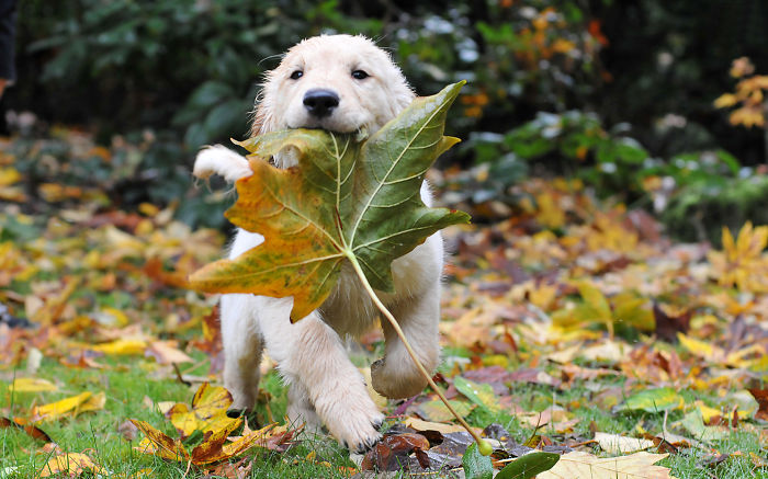 Happy Puppy Im Autumn