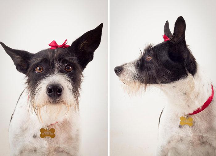 cute-dogs-photography-juliana-frug-4