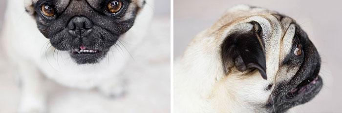 cute-dogs-photography-juliana-frug-5