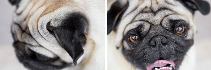 cute-dogs-photography-juliana-frug-6