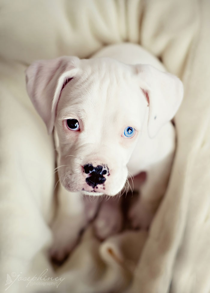 13 Unusually Beautiful Animals With Different Colored Eyes Bored Panda