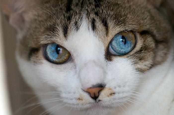 La Gatto Cat Cafe